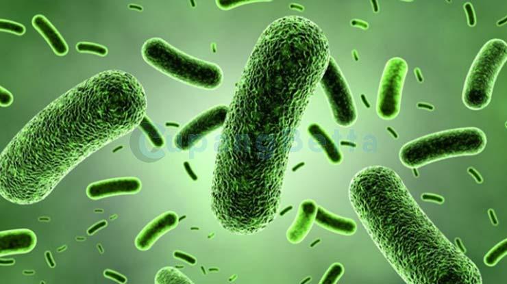 Pembasmi Bakteri dan Jamur
