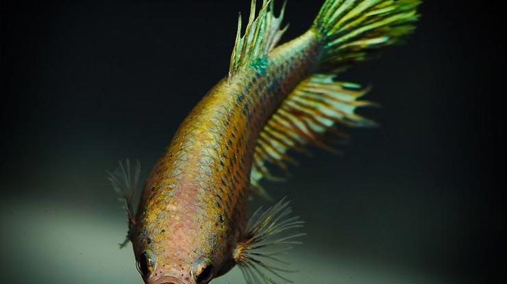 Dilihat Dari Atas Ikan Terlihat Gendut