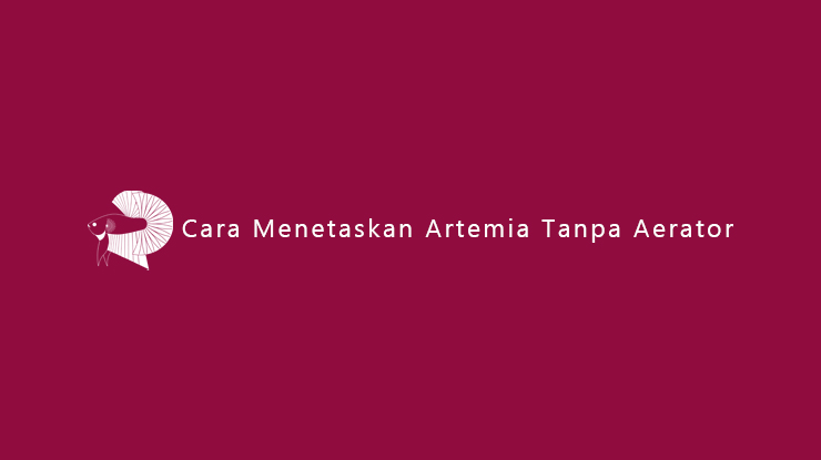 Cara Menetaskan Artemia Tanpa Aerator
