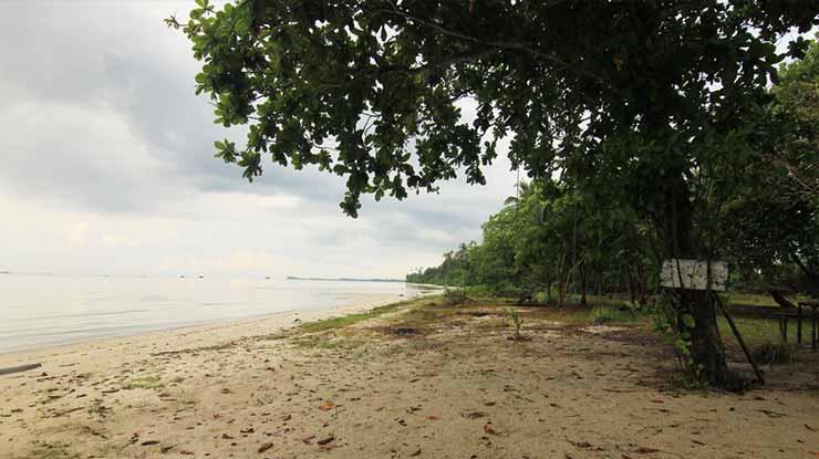 Tumbuh Di Pesisir Pantai